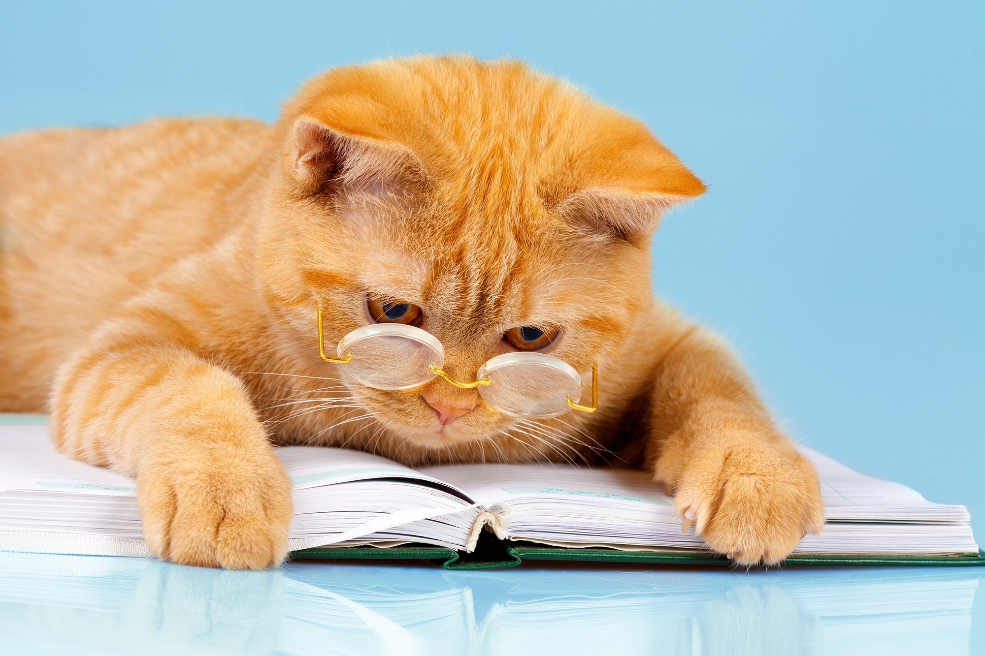 Descriptive image: a cat wearing glasses and looking at a book