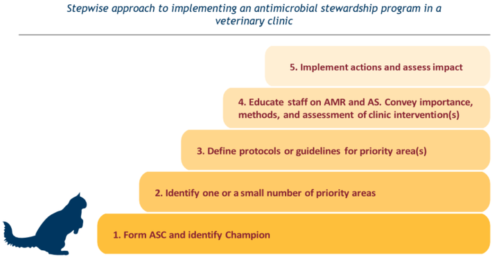 Stepwise approach to implementing an antimicrobial stewardship program in a veterinary clinic